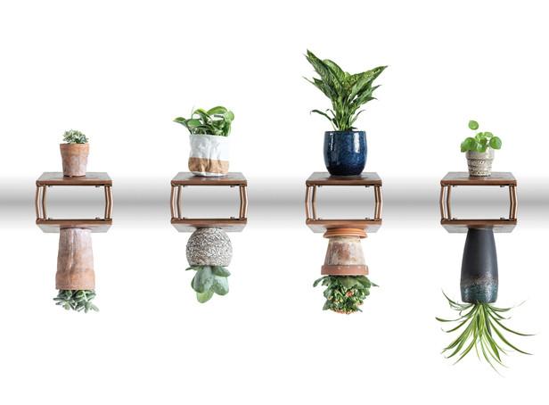 Planten doen leven