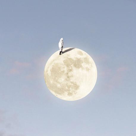 Moon Walker.jpg