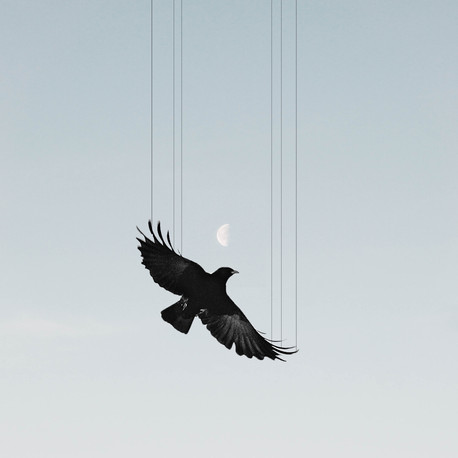 Flightless.jpg