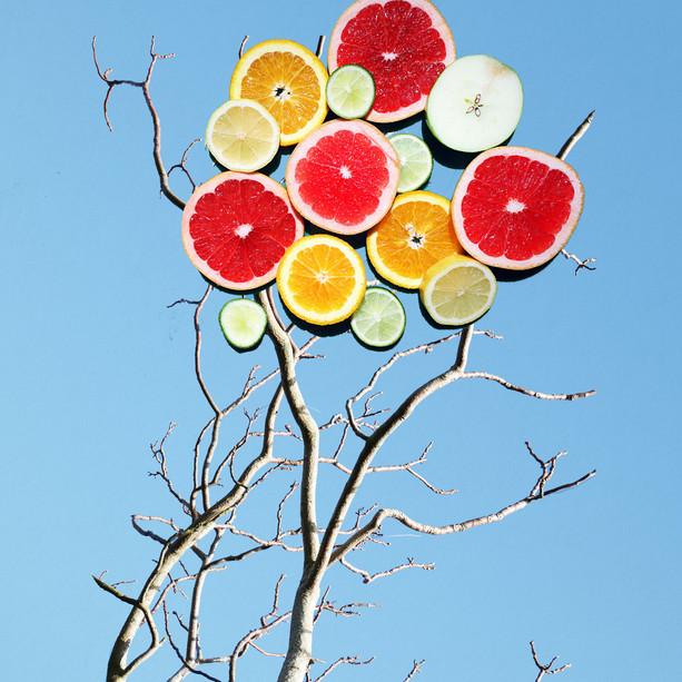 'Citrus Season'
