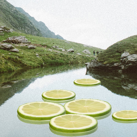lime lily pads.jpg