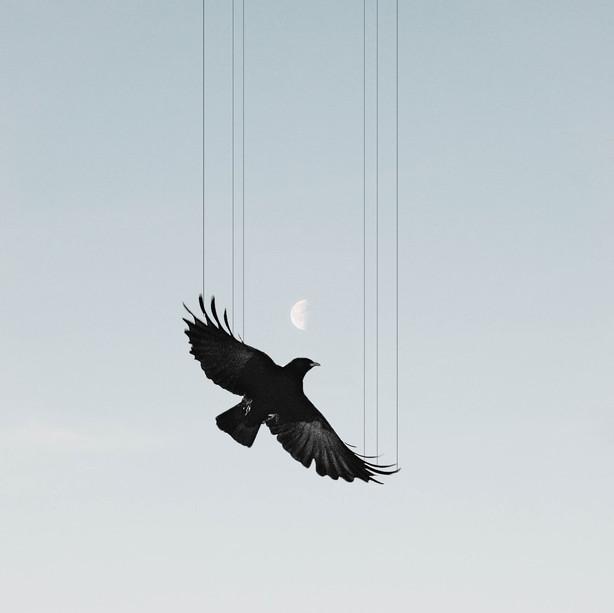 'Flightless'