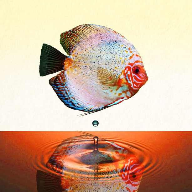 'Fish out of Water III'
