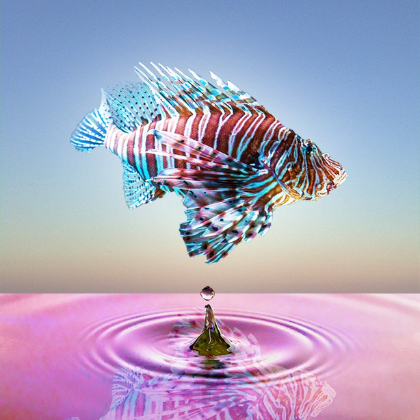 'Fish out of Water II'
