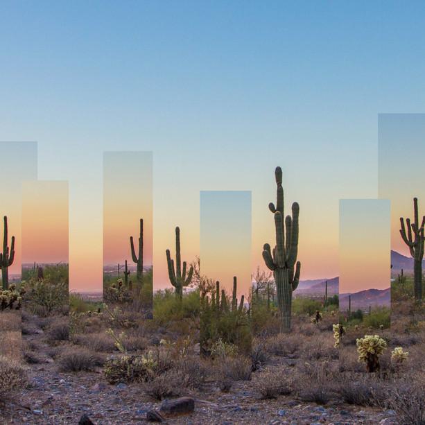 'Cactus Hill'