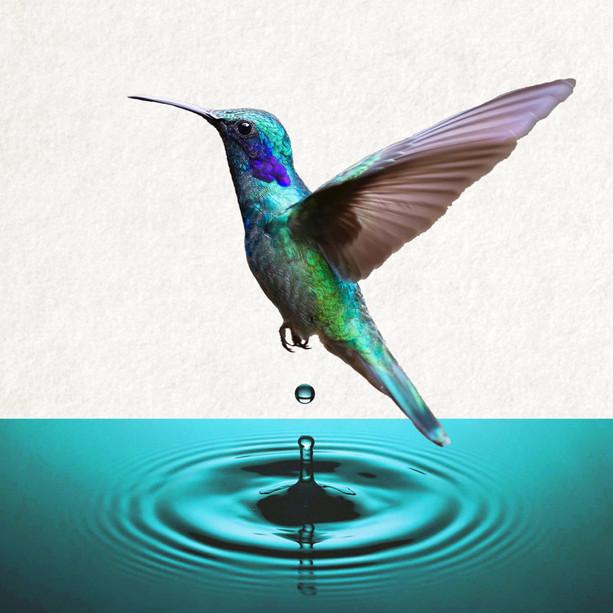 'Hummingbird'