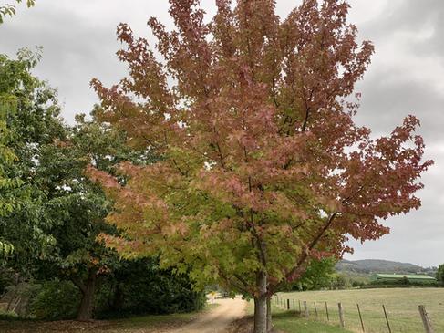 Yackandandah Autumn Colours
