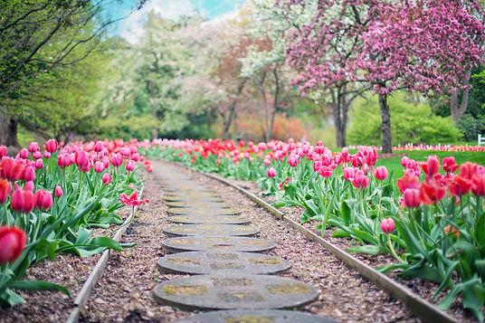 beautiful-bloom-blooming-414160-1-e15263