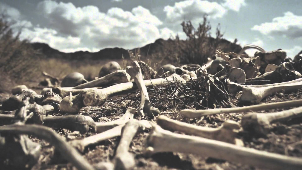 drybones.jpg