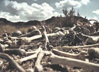 Day 13: Bones of the Dead (Ezekiel 36 & 37)