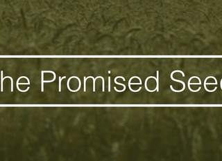The Promised Seed