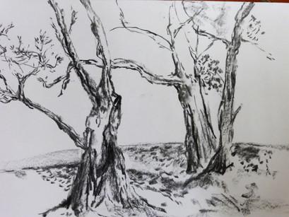 les grands arbres 3