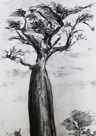 les grands arbres 1