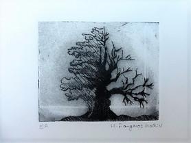 du côté des arbres 5