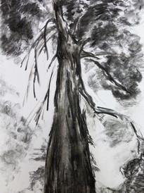les grands arbres 2