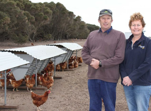 ABC Reports on Free Range Stocking Limits
