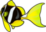 Yellowtail Clownfish graphic