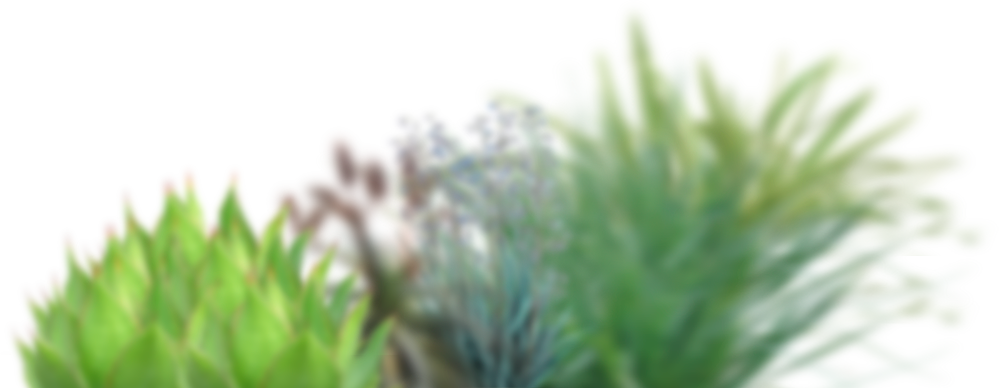 R plants.png