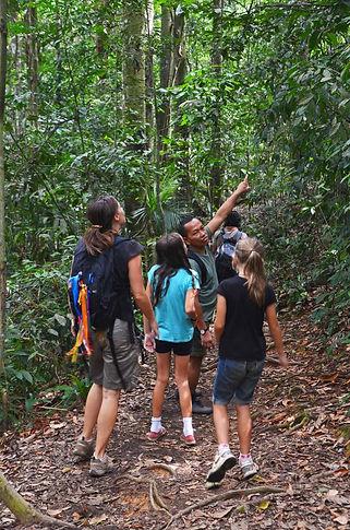 Family travel: looking for orangutans in Sumatra