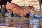 SY Horse Mud.jpg