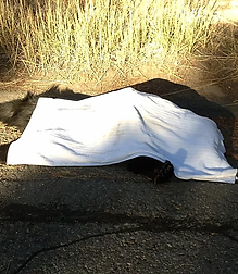 Bear hit on Hwy after investigating 205's garbage.  Neighbor on HWY said they heard it cry b4 authorities euthanized her  :(