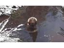SY Mud Pup.jpg