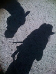 Horse and My Shadow.jpg