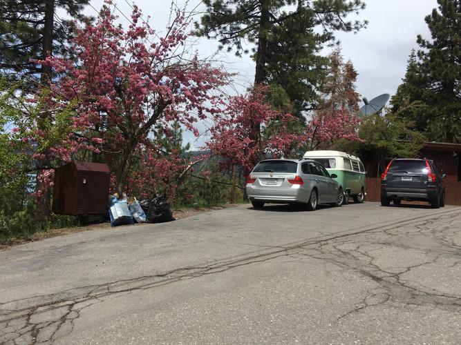 205 Park Lane - 5 19 2020-Trash Out (24