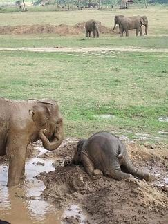 Elephant Overwhelmed.jpg