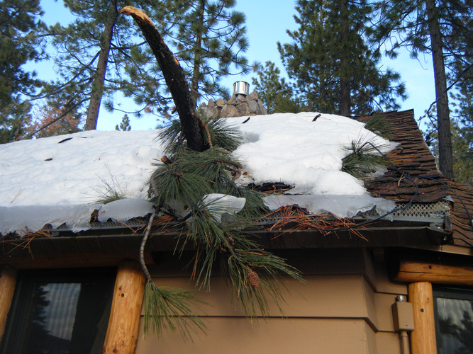 Tree stuck in my Roof - 1/9/17 until March