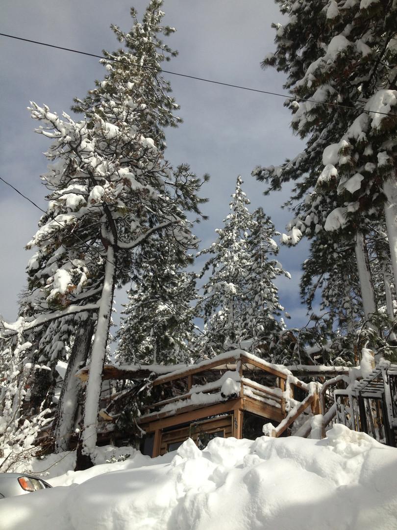 Tree Fell on Cabin - 1/9/17
