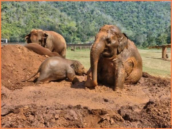 SY mud-bath-with-elephants.jpg