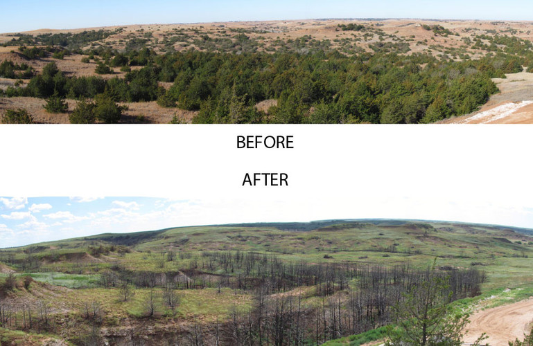 Before and After Prescribed Burns