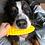 Thumbnail: SODAPUP - Épis de Maïs - Jouet à mâcher en nylon pour mâcheurs extrêmes