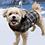 Thumbnail: DOGGIE-Q - Manteau BÛCHERON Bleu - pour petits chiens