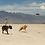 Thumbnail: RUFFWEAR - Frisbee CAMP