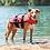 Thumbnail: EZYDOG - Veste de Flottaison Rouge - Chien de 15lbs et +   Prix à partir de