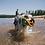 Thumbnail: RUFFWEAR - Frisbee Hydro Plane  Aurora Teal