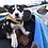 Thumbnail: EZYDOG - Veste de Flottaison Rouge - Chien de 15 lbs et -