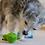 Thumbnail: CYCLE DOG - Jouet Intéractif Tortue