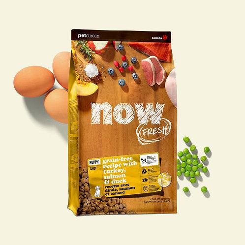 PETCUREAN NOW FRESH - Sans Grains CHIOT Dinde/Saumon/Canard