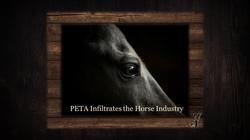 Peta Infiltrates The Horse Industry Grap