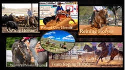 Western Horse Industry