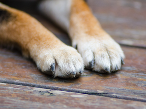Paw Care for Your Dog!