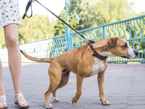 How to Stop Leash Pulling