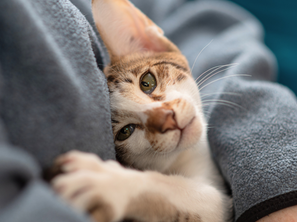 Decode Your Cat: Signs They Love You