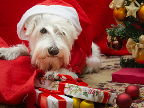 Pet Present Fun Facts and Tips