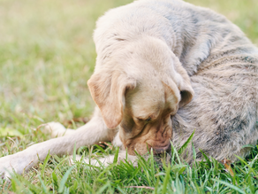 Canine Skin Problems and Solutions