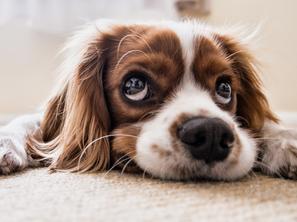 Breaking Your Dog's Begging Habit