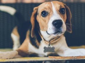 Ways to Keep Your Dog Fresh Between Baths!
